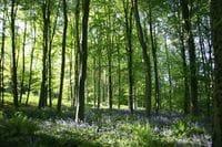 Queens Wood Dinmore
